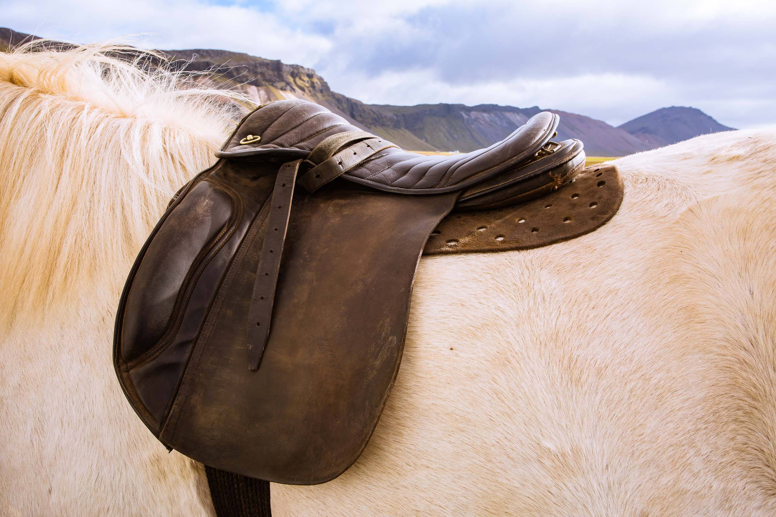 Saddle on Icelandic horse
